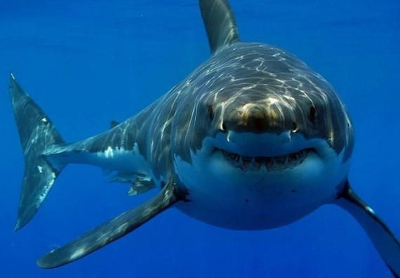 que significa soñar con tiburones