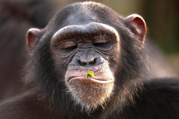 que significa soñar con monos