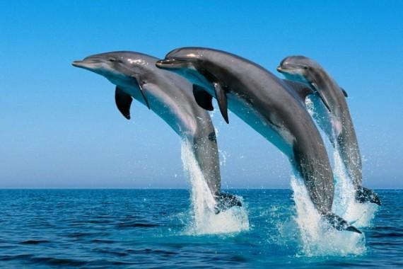 que significa soñar con delfines